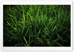 Green Grass HD Wide Wallpaper for Widescreen