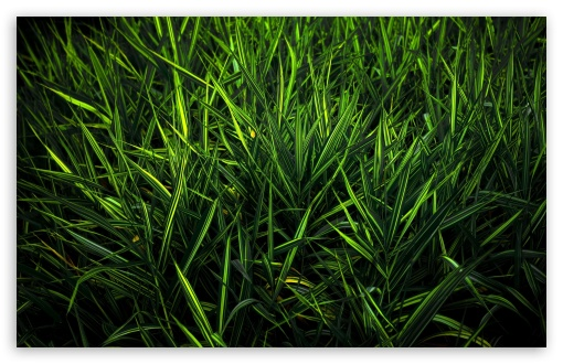 Green Grass HD wallpaper for Wide 16:10 5:3 Widescreen WHXGA WQXGA WUXGA WXGA WGA ; HD 16:9 High Definition WQHD QWXGA 1080p 900p 720p QHD nHD ; Standard 4:3 5:4 3:2 Fullscreen UXGA XGA SVGA QSXGA SXGA DVGA HVGA HQVGA devices ( Apple PowerBook G4 iPhone 4 3G 3GS iPod Touch ) ; Tablet 1:1 ; iPad 1/2/Mini ; Mobile 4:3 5:3 3:2 16:9 5:4 - UXGA XGA SVGA WGA DVGA HVGA HQVGA devices ( Apple PowerBook G4 iPhone 4 3G 3GS iPod Touch ) WQHD QWXGA 1080p 900p 720p QHD nHD QSXGA SXGA ; Dual 5:4 QSXGA SXGA ;