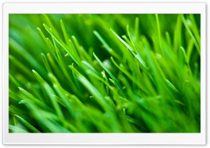 Green Grass Background HD Wide Wallpaper for Widescreen