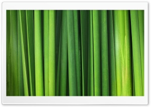 Green Grass Blades HD Wide Wallpaper for Widescreen