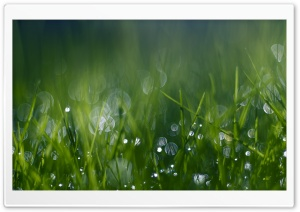 Green Grass Bokeh HD Wide Wallpaper for Widescreen