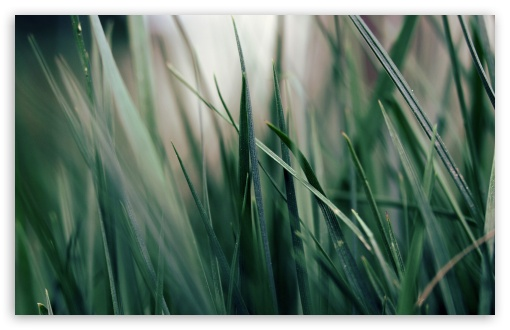 Green Grass Close-up HD wallpaper for Wide 16:10 5:3 Widescreen WHXGA WQXGA WUXGA WXGA WGA ; HD 16:9 High Definition WQHD QWXGA 1080p 900p 720p QHD nHD ; Standard 4:3 5:4 3:2 Fullscreen UXGA XGA SVGA QSXGA SXGA DVGA HVGA HQVGA devices ( Apple PowerBook G4 iPhone 4 3G 3GS iPod Touch ) ; Tablet 1:1 ; iPad 1/2/Mini ; Mobile 4:3 5:3 3:2 16:9 5:4 - UXGA XGA SVGA WGA DVGA HVGA HQVGA devices ( Apple PowerBook G4 iPhone 4 3G 3GS iPod Touch ) WQHD QWXGA 1080p 900p 720p QHD nHD QSXGA SXGA ;