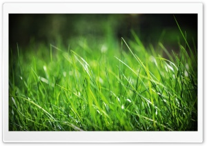 Green Grass Close Up HD Wide Wallpaper for Widescreen