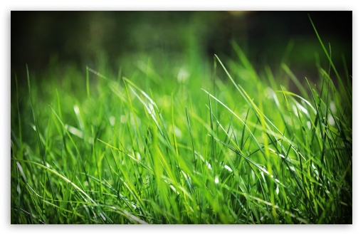 Green Grass Close Up HD wallpaper for Wide 16:10 5:3 Widescreen WHXGA WQXGA WUXGA WXGA WGA ; HD 16:9 High Definition WQHD QWXGA 1080p 900p 720p QHD nHD ; Standard 4:3 5:4 3:2 Fullscreen UXGA XGA SVGA QSXGA SXGA DVGA HVGA HQVGA devices ( Apple PowerBook G4 iPhone 4 3G 3GS iPod Touch ) ; Tablet 1:1 ; iPad 1/2/Mini ; Mobile 4:3 5:3 3:2 16:9 5:4 - UXGA XGA SVGA WGA DVGA HVGA HQVGA devices ( Apple PowerBook G4 iPhone 4 3G 3GS iPod Touch ) WQHD QWXGA 1080p 900p 720p QHD nHD QSXGA SXGA ; Dual 16:10 5:3 16:9 4:3 5:4 WHXGA WQXGA WUXGA WXGA WGA WQHD QWXGA 1080p 900p 720p QHD nHD UXGA XGA SVGA QSXGA SXGA ;