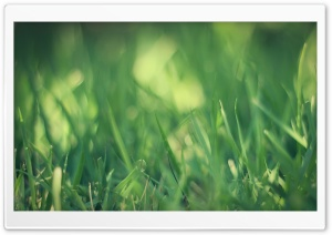 Green Grass Macro HD Wide Wallpaper for Widescreen