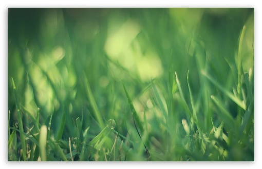 Green Grass Macro HD wallpaper for Wide 16:10 5:3 Widescreen WHXGA WQXGA WUXGA WXGA WGA ; HD 16:9 High Definition WQHD QWXGA 1080p 900p 720p QHD nHD ; Standard 4:3 5:4 3:2 Fullscreen UXGA XGA SVGA QSXGA SXGA DVGA HVGA HQVGA devices ( Apple PowerBook G4 iPhone 4 3G 3GS iPod Touch ) ; Tablet 1:1 ; iPad 1/2/Mini ; Mobile 4:3 5:3 3:2 16:9 5:4 - UXGA XGA SVGA WGA DVGA HVGA HQVGA devices ( Apple PowerBook G4 iPhone 4 3G 3GS iPod Touch ) WQHD QWXGA 1080p 900p 720p QHD nHD QSXGA SXGA ; Dual 16:10 5:3 16:9 4:3 5:4 WHXGA WQXGA WUXGA WXGA WGA WQHD QWXGA 1080p 900p 720p QHD nHD UXGA XGA SVGA QSXGA SXGA ;