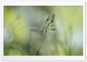 Green Grass Seeds HD Wide Wallpaper for Widescreen