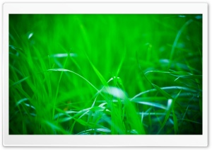 Green Grass, Summer HD Wide Wallpaper for Widescreen