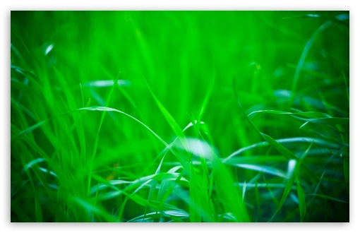 Green Grass, Summer HD wallpaper for Wide 16:10 5:3 Widescreen WHXGA WQXGA WUXGA WXGA WGA ; HD 16:9 High Definition WQHD QWXGA 1080p 900p 720p QHD nHD ; Standard 4:3 5:4 3:2 Fullscreen UXGA XGA SVGA QSXGA SXGA DVGA HVGA HQVGA devices ( Apple PowerBook G4 iPhone 4 3G 3GS iPod Touch ) ; Tablet 1:1 ; iPad 1/2/Mini ; Mobile 4:3 5:3 3:2 16:9 5:4 - UXGA XGA SVGA WGA DVGA HVGA HQVGA devices ( Apple PowerBook G4 iPhone 4 3G 3GS iPod Touch ) WQHD QWXGA 1080p 900p 720p QHD nHD QSXGA SXGA ; Dual 16:10 5:3 4:3 5:4 WHXGA WQXGA WUXGA WXGA WGA UXGA XGA SVGA QSXGA SXGA ;