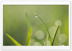 Green Grass, Water Drops, Macro, Bokeh HD Wide Wallpaper for Widescreen