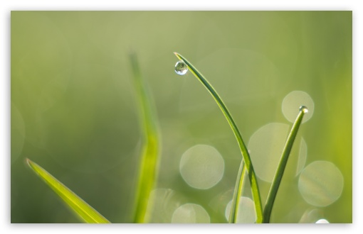 Green Grass, Water Drops, Macro, Bokeh ❤ 4K UHD Wallpaper for Wide 16:10 5:3 Widescreen WHXGA WQXGA WUXGA WXGA WGA ; 4K UHD 16:9 Ultra High Definition 2160p 1440p 1080p 900p 720p ; Standard 4:3 5:4 3:2 Fullscreen UXGA XGA SVGA QSXGA SXGA DVGA HVGA HQVGA ( Apple PowerBook G4 iPhone 4 3G 3GS iPod Touch ) ; Smartphone 16:9 3:2 5:3 2160p 1440p 1080p 900p 720p DVGA HVGA HQVGA ( Apple PowerBook G4 iPhone 4 3G 3GS iPod Touch ) WGA ; Tablet 1:1 ; iPad 1/2/Mini ; Mobile 4:3 5:3 3:2 16:9 5:4 - UXGA XGA SVGA WGA DVGA HVGA HQVGA ( Apple PowerBook G4 iPhone 4 3G 3GS iPod Touch ) 2160p 1440p 1080p 900p 720p QSXGA SXGA ;