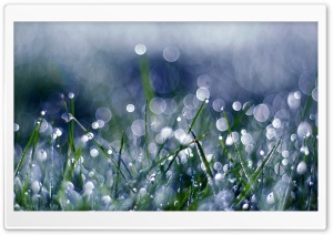 Green Grass White Bokeh HD Wide Wallpaper for Widescreen