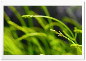 Green Lavender HD Wide Wallpaper for Widescreen