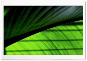 Green Leaf 2 HD Wide Wallpaper for Widescreen