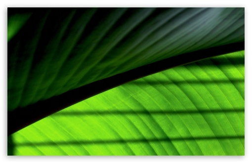 Green Leaf 2 HD wallpaper for Wide 16:10 5:3 Widescreen WHXGA WQXGA WUXGA WXGA WGA ; HD 16:9 High Definition WQHD QWXGA 1080p 900p 720p QHD nHD ; Standard 4:3 5:4 3:2 Fullscreen UXGA XGA SVGA QSXGA SXGA DVGA HVGA HQVGA devices ( Apple PowerBook G4 iPhone 4 3G 3GS iPod Touch ) ; Tablet 1:1 ; iPad 1/2/Mini ; Mobile 4:3 5:3 3:2 16:9 5:4 - UXGA XGA SVGA WGA DVGA HVGA HQVGA devices ( Apple PowerBook G4 iPhone 4 3G 3GS iPod Touch ) WQHD QWXGA 1080p 900p 720p QHD nHD QSXGA SXGA ;