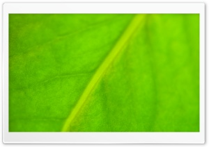 Green Leaf HD Wide Wallpaper for 4K UHD Widescreen desktop & smartphone