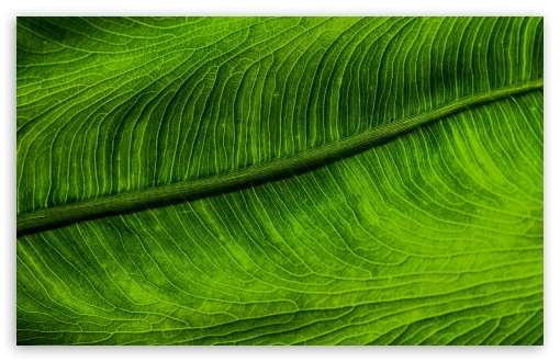 Green Leaf HD wallpaper for Wide 16:10 5:3 Widescreen WHXGA WQXGA WUXGA WXGA WGA ; HD 16:9 High Definition WQHD QWXGA 1080p 900p 720p QHD nHD ; Standard 4:3 5:4 3:2 Fullscreen UXGA XGA SVGA QSXGA SXGA DVGA HVGA HQVGA devices ( Apple PowerBook G4 iPhone 4 3G 3GS iPod Touch ) ; Smartphone 16:9 3:2 5:3 WQHD QWXGA 1080p 900p 720p QHD nHD DVGA HVGA HQVGA devices ( Apple PowerBook G4 iPhone 4 3G 3GS iPod Touch ) WGA ; Tablet 1:1 ; iPad 1/2/Mini ; Mobile 4:3 5:3 3:2 16:9 5:4 - UXGA XGA SVGA WGA DVGA HVGA HQVGA devices ( Apple PowerBook G4 iPhone 4 3G 3GS iPod Touch ) WQHD QWXGA 1080p 900p 720p QHD nHD QSXGA SXGA ;