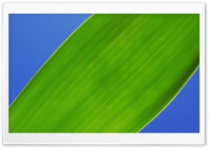 Green Leaf 5 HD Wide Wallpaper for Widescreen