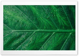 Green Leaf Aesthetic Ultra HD Wallpaper for 4K UHD Widescreen desktop, tablet & smartphone