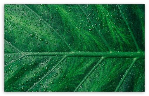 Green Leaf Aesthetic UltraHD Wallpaper for Wide 16:10 5:3 Widescreen WHXGA WQXGA WUXGA WXGA WGA ; UltraWide 21:9 24:10 ; 8K UHD TV 16:9 Ultra High Definition 2160p 1440p 1080p 900p 720p ; UHD 16:9 2160p 1440p 1080p 900p 720p ; Standard 4:3 5:4 3:2 Fullscreen UXGA XGA SVGA QSXGA SXGA DVGA HVGA HQVGA ( Apple PowerBook G4 iPhone 4 3G 3GS iPod Touch ) ; Smartphone 16:9 3:2 5:3 2160p 1440p 1080p 900p 720p DVGA HVGA HQVGA ( Apple PowerBook G4 iPhone 4 3G 3GS iPod Touch ) WGA ; Tablet 1:1 ; iPad 1/2/Mini ; Mobile 4:3 5:3 3:2 16:9 5:4 - UXGA XGA SVGA WGA DVGA HVGA HQVGA ( Apple PowerBook G4 iPhone 4 3G 3GS iPod Touch ) 2160p 1440p 1080p 900p 720p QSXGA SXGA ;