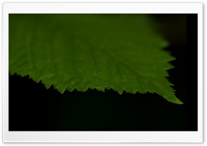 Green Leaf Against A Black Background HD Wide Wallpaper for Widescreen