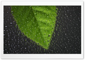 Green Leaf Behind Wet Window HD Wide Wallpaper for Widescreen