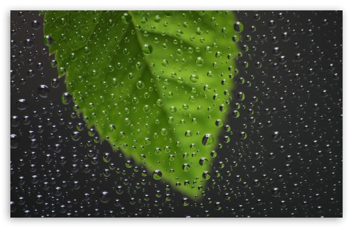 Green Leaf Behind Wet Window HD wallpaper for Wide 16:10 5:3 Widescreen WHXGA WQXGA WUXGA WXGA WGA ; HD 16:9 High Definition WQHD QWXGA 1080p 900p 720p QHD nHD ; Standard 4:3 5:4 3:2 Fullscreen UXGA XGA SVGA QSXGA SXGA DVGA HVGA HQVGA devices ( Apple PowerBook G4 iPhone 4 3G 3GS iPod Touch ) ; Tablet 1:1 ; iPad 1/2/Mini ; Mobile 4:3 5:3 3:2 16:9 5:4 - UXGA XGA SVGA WGA DVGA HVGA HQVGA devices ( Apple PowerBook G4 iPhone 4 3G 3GS iPod Touch ) WQHD QWXGA 1080p 900p 720p QHD nHD QSXGA SXGA ;