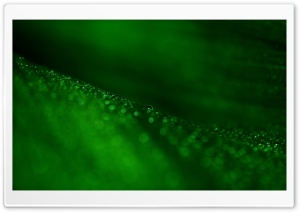 Green Leaf Bokeh Ultra HD Wallpaper for 4K UHD Widescreen desktop, tablet & smartphone