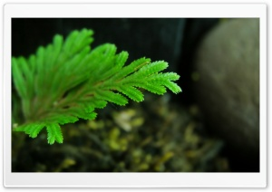 Green Leaf Close Up HD Wide Wallpaper for Widescreen