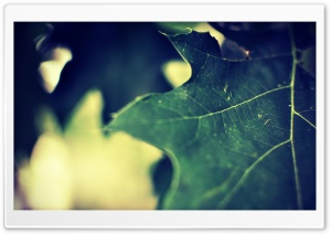 Green Leaf Macro HD Wide Wallpaper for Widescreen