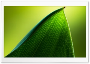 Green Leaf Macro HD Wide Wallpaper for 4K UHD Widescreen desktop & smartphone