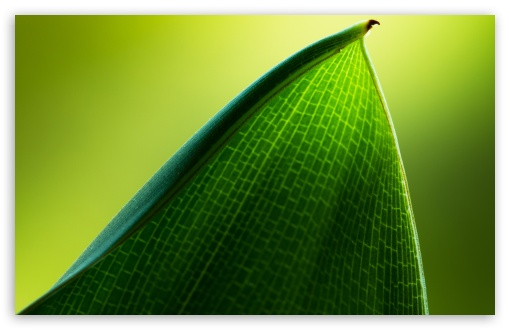 Green Leaf Macro ❤ 4K UHD Wallpaper for Wide 16:10 5:3 Widescreen WHXGA WQXGA WUXGA WXGA WGA ; 4K UHD 16:9 Ultra High Definition 2160p 1440p 1080p 900p 720p ; Standard 4:3 5:4 3:2 Fullscreen UXGA XGA SVGA QSXGA SXGA DVGA HVGA HQVGA ( Apple PowerBook G4 iPhone 4 3G 3GS iPod Touch ) ; iPad 1/2/Mini ; Mobile 4:3 5:3 3:2 16:9 5:4 - UXGA XGA SVGA WGA DVGA HVGA HQVGA ( Apple PowerBook G4 iPhone 4 3G 3GS iPod Touch ) 2160p 1440p 1080p 900p 720p QSXGA SXGA ;