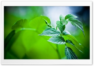 Green Leaves HD Wide Wallpaper for 4K UHD Widescreen desktop & smartphone