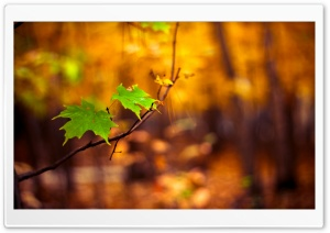 Green Leaves Autumn HD Wide Wallpaper for Widescreen