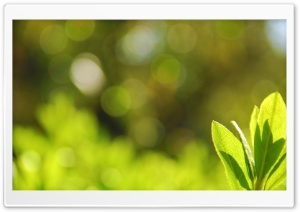 Green Leaves Bokeh HD Wide Wallpaper for Widescreen