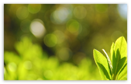 Green Leaves Bokeh ❤ 4K UHD Wallpaper for Wide 16:10 5:3 Widescreen WHXGA WQXGA WUXGA WXGA WGA ; 4K UHD 16:9 Ultra High Definition 2160p 1440p 1080p 900p 720p ; UHD 16:9 2160p 1440p 1080p 900p 720p ; Standard 4:3 5:4 3:2 Fullscreen UXGA XGA SVGA QSXGA SXGA DVGA HVGA HQVGA ( Apple PowerBook G4 iPhone 4 3G 3GS iPod Touch ) ; Tablet 1:1 ; iPad 1/2/Mini ; Mobile 4:3 5:3 3:2 16:9 5:4 - UXGA XGA SVGA WGA DVGA HVGA HQVGA ( Apple PowerBook G4 iPhone 4 3G 3GS iPod Touch ) 2160p 1440p 1080p 900p 720p QSXGA SXGA ; Dual 5:4 QSXGA SXGA ;