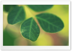 Green Leaves Bokeh HD Wide Wallpaper for 4K UHD Widescreen desktop & smartphone