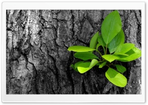 Green Leaves Bunch HD Wide Wallpaper for Widescreen