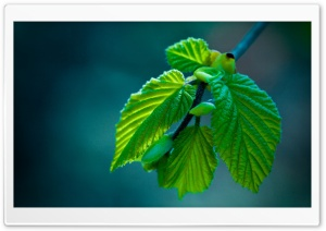 Green Leaves Offspring HD Wide Wallpaper for Widescreen