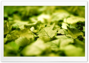 Green Leaves On The Ground HD Wide Wallpaper for Widescreen