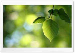 Green Leaves, Spring HD Wide Wallpaper for Widescreen