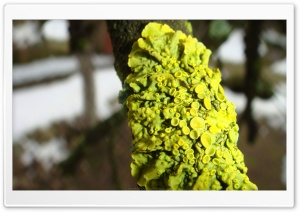 Green Lichens HD Wide Wallpaper for Widescreen