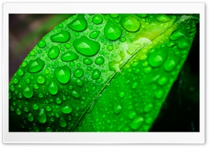 Green Life HD Wide Wallpaper for Widescreen