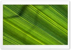 Green Lines HD Wide Wallpaper for Widescreen