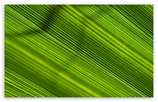 Green Lines ❤ 4K UHD Wallpaper for Wide 16:10 5:3 Widescreen WHXGA WQXGA WUXGA WXGA WGA ; 4K UHD 16:9 Ultra High Definition 2160p 1440p 1080p 900p 720p ; UHD 16:9 2160p 1440p 1080p 900p 720p ; Standard 4:3 5:4 3:2 Fullscreen UXGA XGA SVGA QSXGA SXGA DVGA HVGA HQVGA ( Apple PowerBook G4 iPhone 4 3G 3GS iPod Touch ) ; Smartphone 5:3 WGA ; Tablet 1:1 ; iPad 1/2/Mini ; Mobile 4:3 5:3 3:2 16:9 5:4 - UXGA XGA SVGA WGA DVGA HVGA HQVGA ( Apple PowerBook G4 iPhone 4 3G 3GS iPod Touch ) 2160p 1440p 1080p 900p 720p QSXGA SXGA ; Dual 16:10 5:3 16:9 4:3 5:4 WHXGA WQXGA WUXGA WXGA WGA 2160p 1440p 1080p 900p 720p UXGA XGA SVGA QSXGA SXGA ;