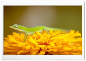 Green Lizard HD Wide Wallpaper for Widescreen