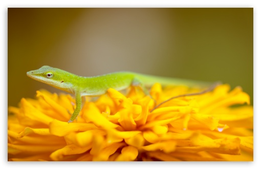 Green Lizard UltraHD Wallpaper for Wide 16:10 5:3 Widescreen WHXGA WQXGA WUXGA WXGA WGA ; 8K UHD TV 16:9 Ultra High Definition 2160p 1440p 1080p 900p 720p ; UHD 16:9 2160p 1440p 1080p 900p 720p ; Standard 4:3 5:4 3:2 Fullscreen UXGA XGA SVGA QSXGA SXGA DVGA HVGA HQVGA ( Apple PowerBook G4 iPhone 4 3G 3GS iPod Touch ) ; Smartphone 5:3 WGA ; Tablet 1:1 ; iPad 1/2/Mini ; Mobile 4:3 5:3 3:2 16:9 5:4 - UXGA XGA SVGA WGA DVGA HVGA HQVGA ( Apple PowerBook G4 iPhone 4 3G 3GS iPod Touch ) 2160p 1440p 1080p 900p 720p QSXGA SXGA ; Dual 16:10 5:3 16:9 4:3 5:4 WHXGA WQXGA WUXGA WXGA WGA 2160p 1440p 1080p 900p 720p UXGA XGA SVGA QSXGA SXGA ;