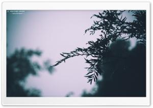 Green Mist HD Wide Wallpaper for 4K UHD Widescreen desktop & smartphone