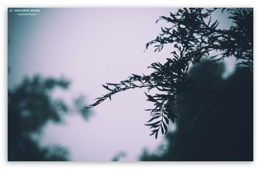 Download Green Mist HD Wallpaper