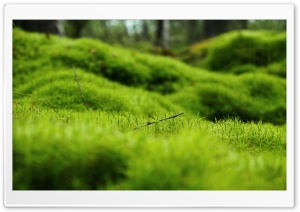 Green Moss HD Wide Wallpaper for Widescreen